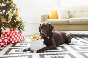 елка,собака, подарок