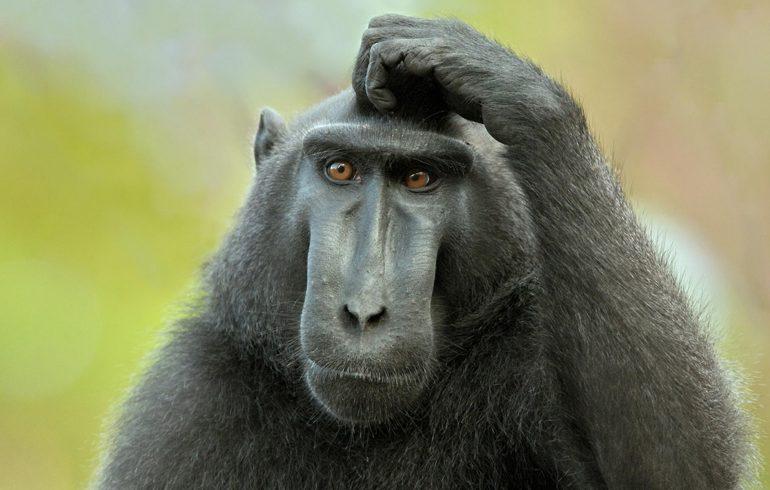 Все об обезьянах