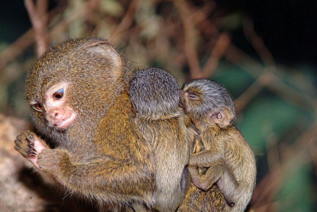 Необыкновенные обезьяны