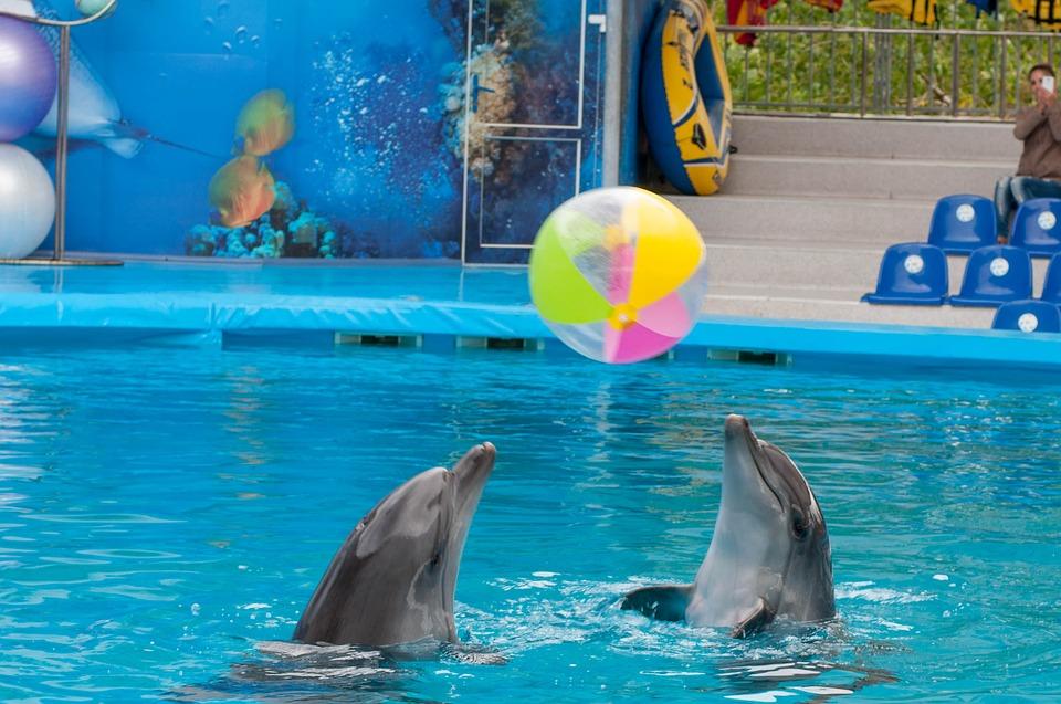 дельфины играют с мячами