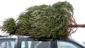 елка, перевозка, новый год
