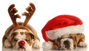 собаки,новый год,сон,костюмы