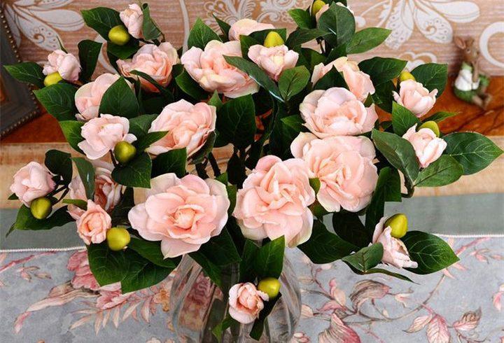 цветы, гардения, уход