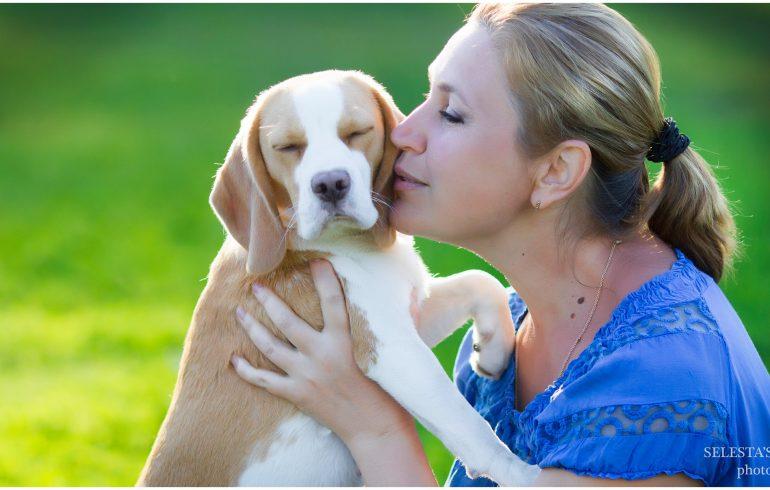 порода собак бигль щенок