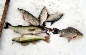 рыба,улов,зима,лед