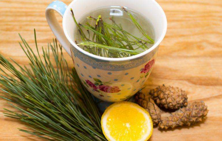 чай, сосна,хвоя,эликсир молодости