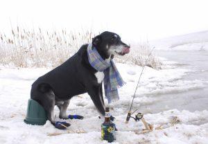 зимняя рыбалка, собака