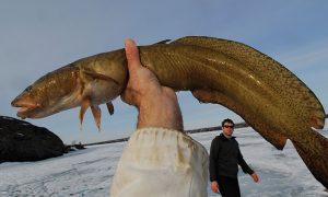 налим,рыбака,зима
