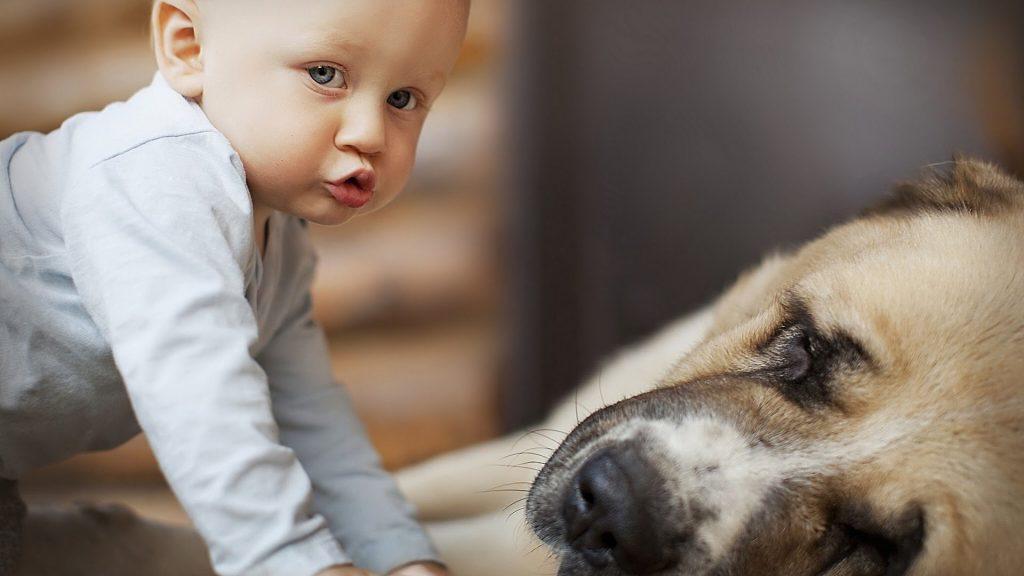 животные, дети, воспитание, жесткость