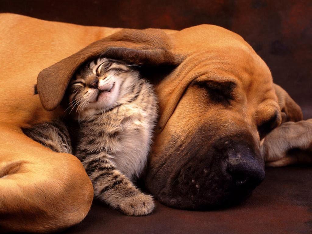собаки, кошки, выбор, домашние любимцы