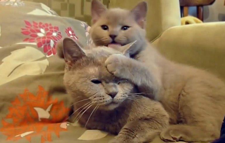 Котики, дети, воспитание, сложности