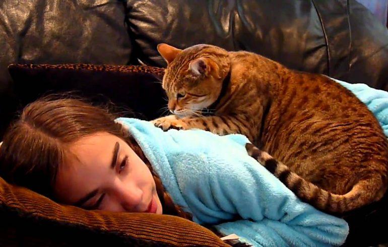 кошки, лечение, терапия