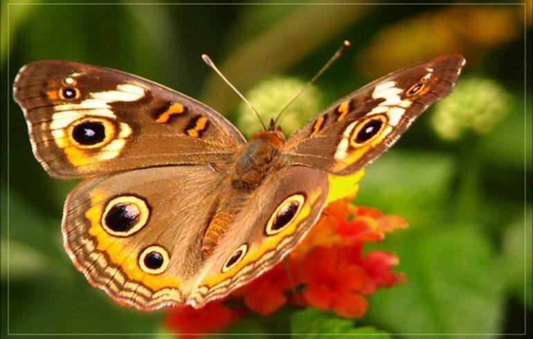 Совет, бабочки, выращиваем дома