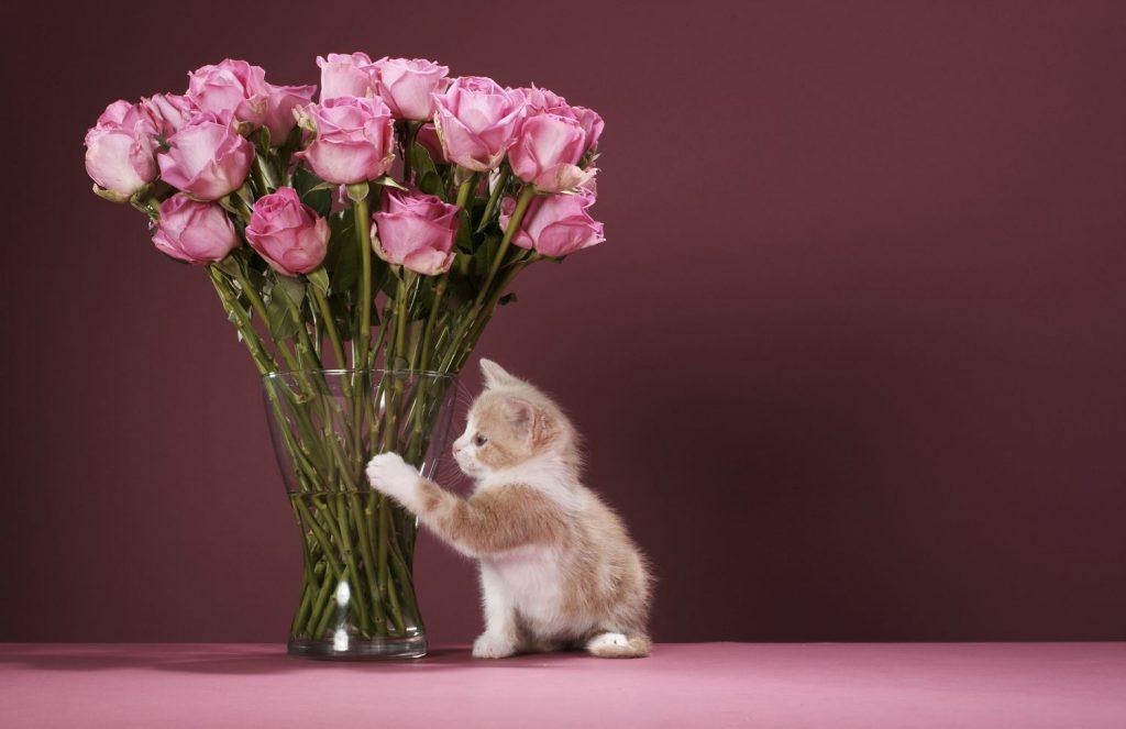 цветы и котенок