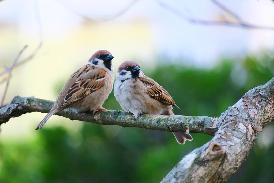 птички сидят на ветке