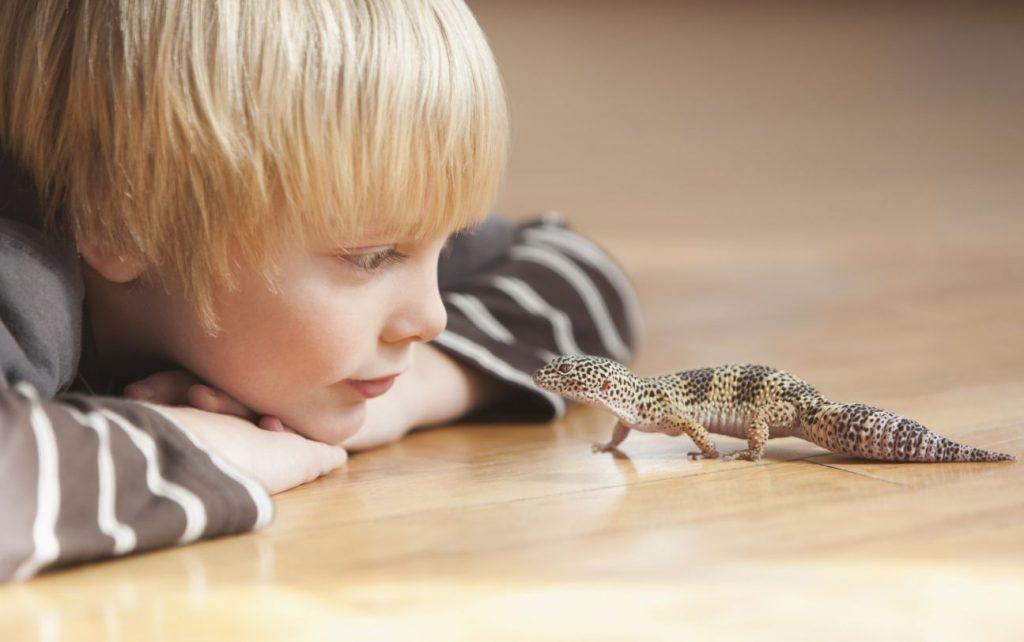 геккон с мальчиком