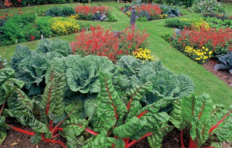 клумба из овощных культур