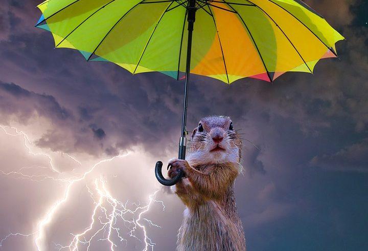 сурок с зонтиком в грозу