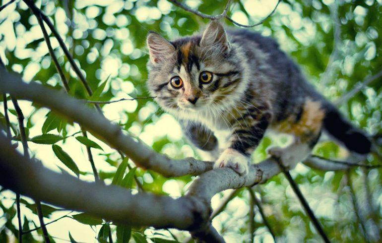 котенок залез на дерево