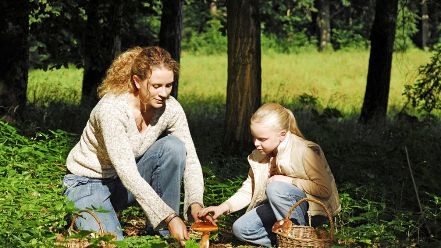 девочка с мамой собирают грибы в лесу