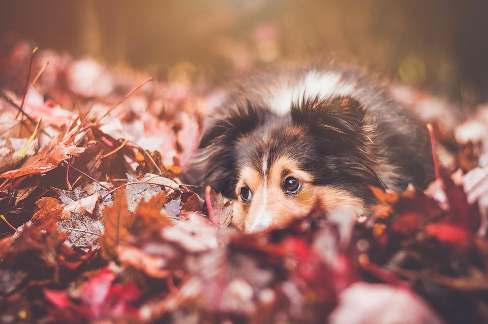 грустная собака осенью
