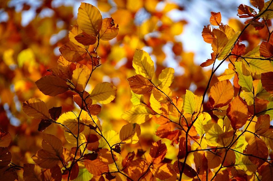 сентябрь, желтые листья