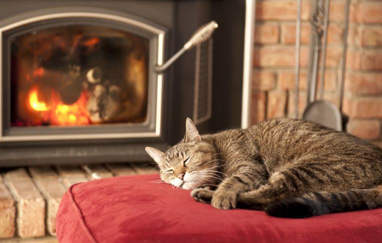 кот спит у камина в доме