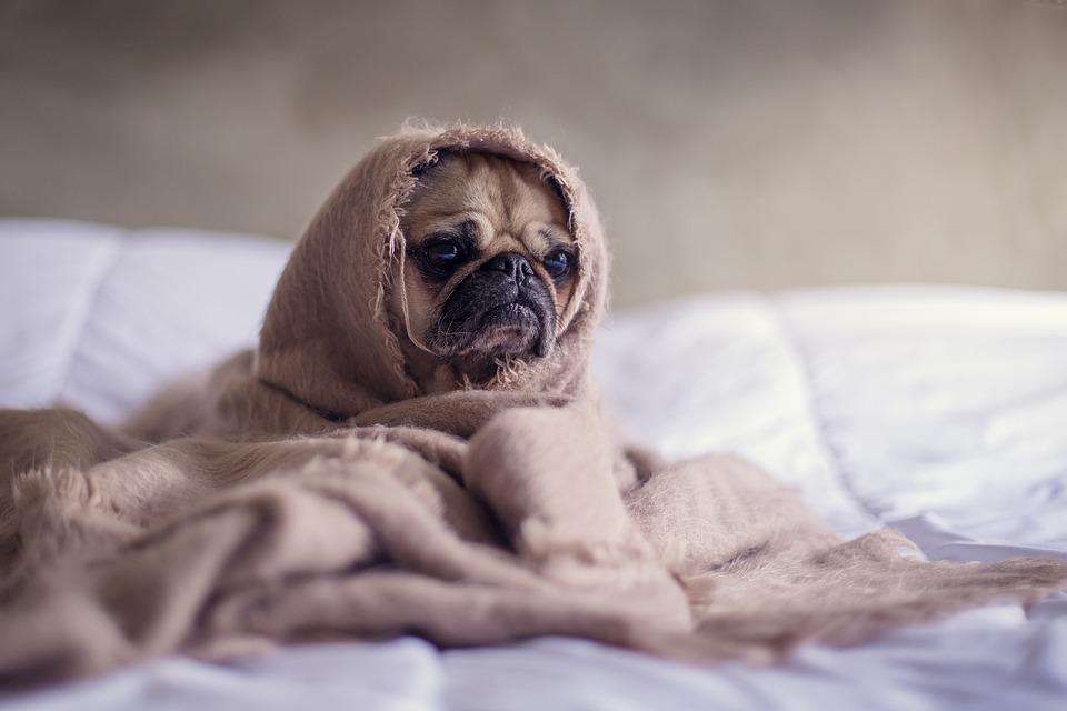 как согреться в холода собаке