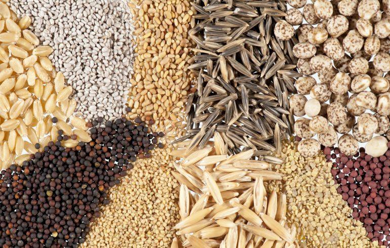 разные семена растений