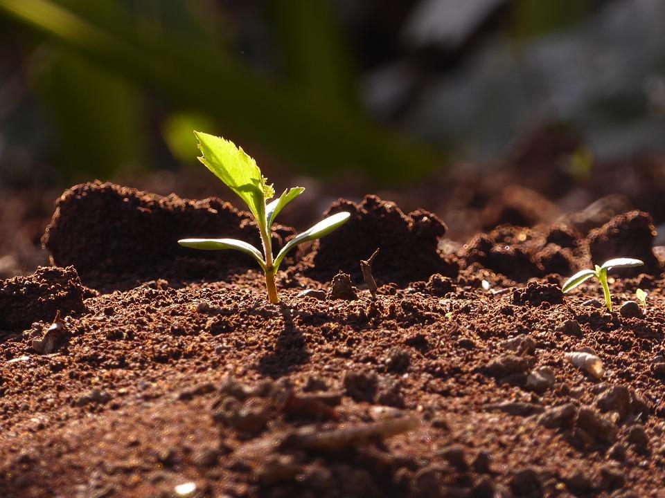 на земле растет расток