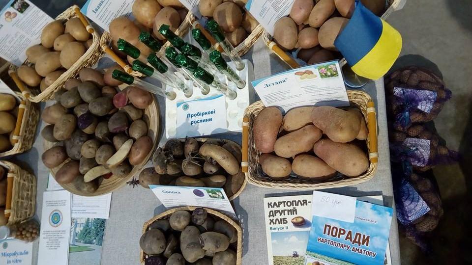 выбор, картофель, посадка