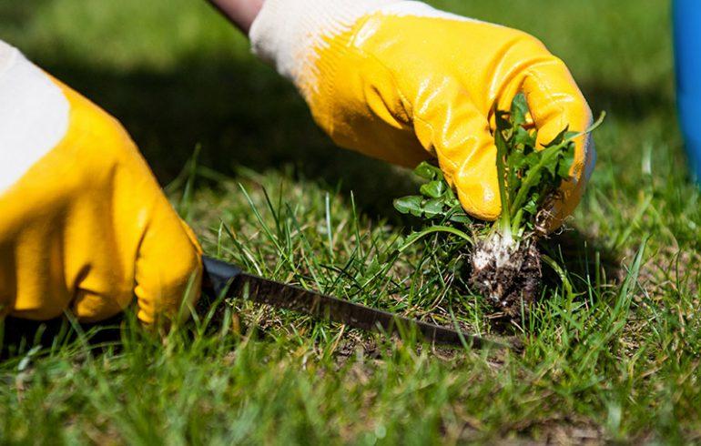 Как бороться с сорняками
