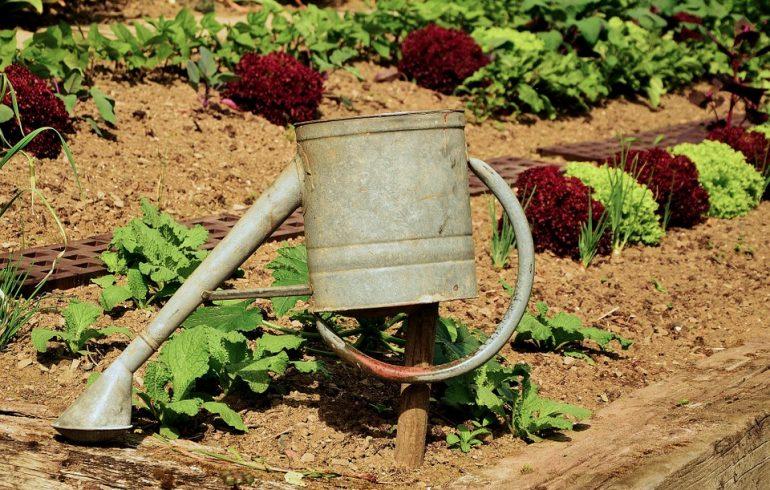 Как помочь растениям пережить засуху