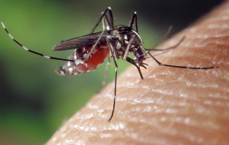 От комаров спасут базилик и ванилин
