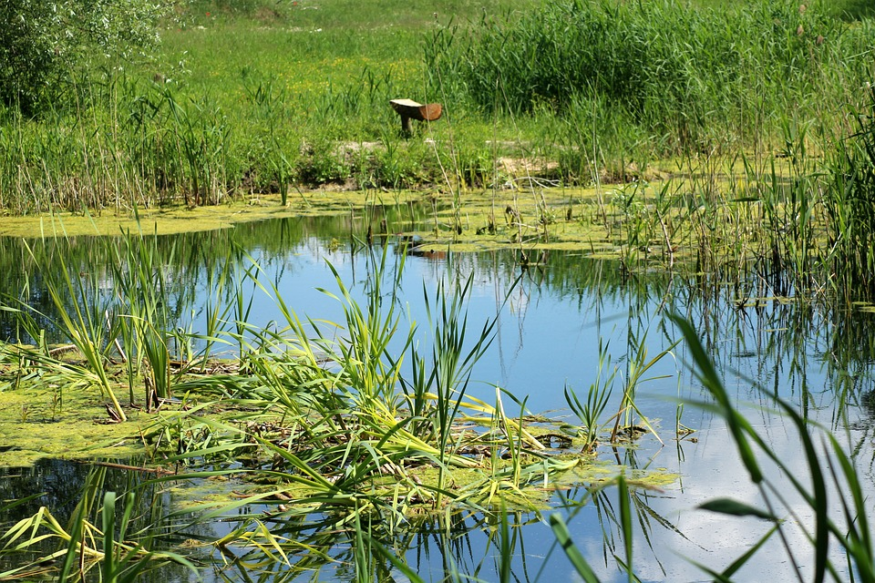 Какими заболеваниями можно заразиться, купаясь в водоемах с непроточной водой.