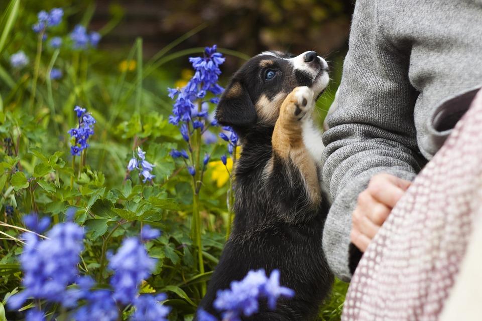 Когда щенку можно делать прививки?