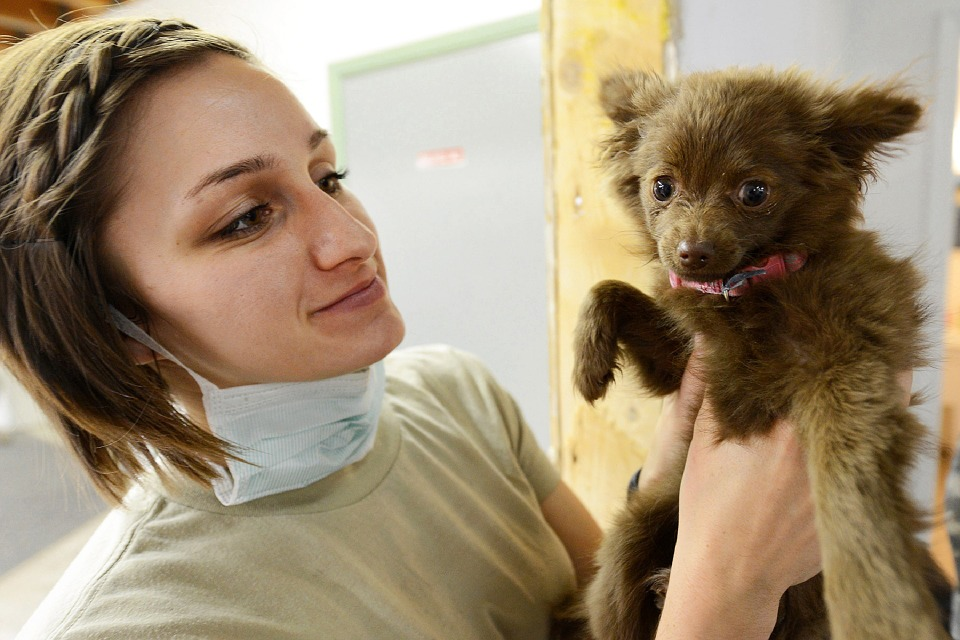 собака на осмотре у ветеринара