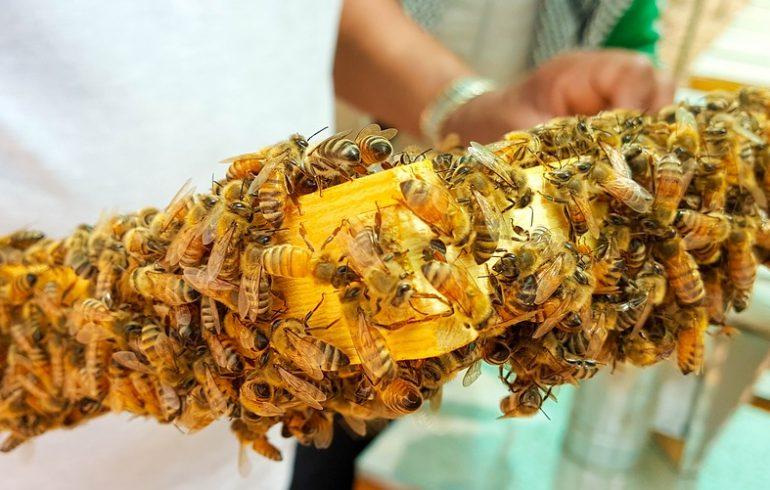 Пчела заменит врача