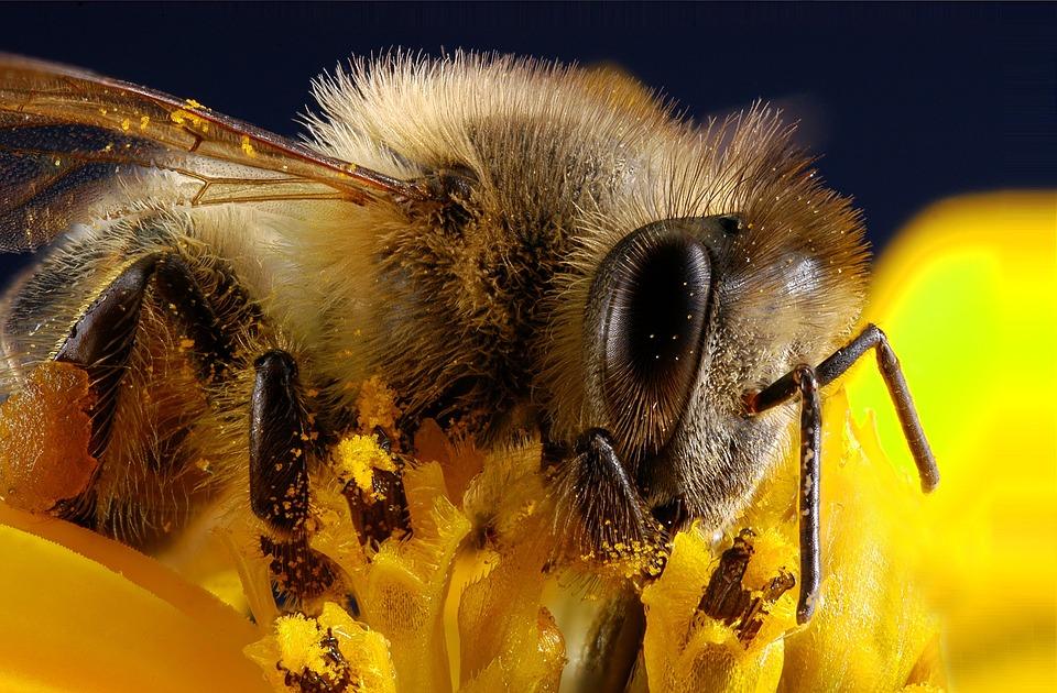 пчела в роли врача