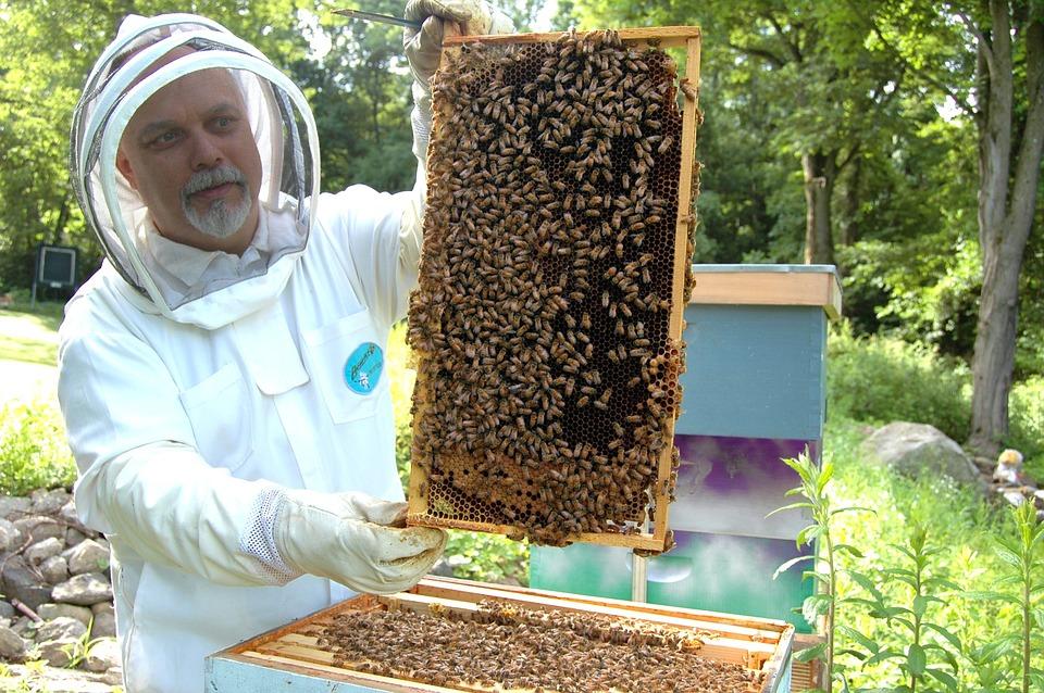 пчелы и пчеловод