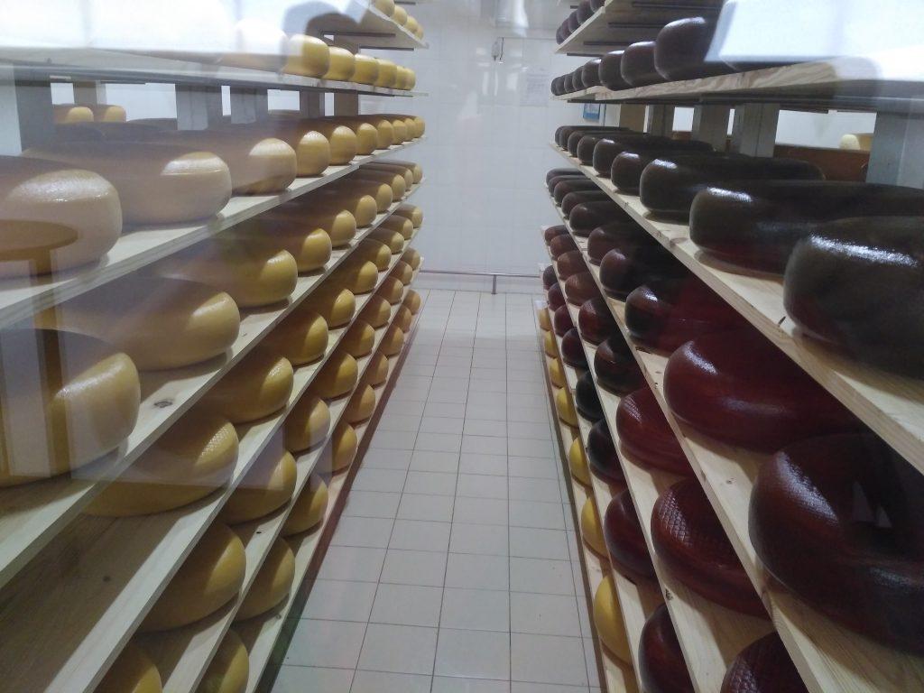 здесь дозревает сыр