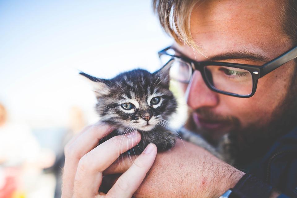 характер кота по гороскопу