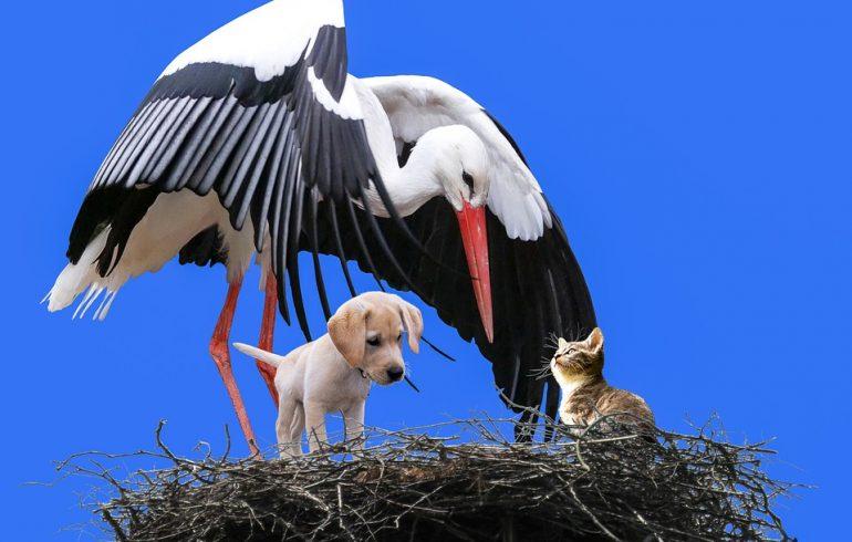 Гороскоп кошек и собак: узнай характер питомца