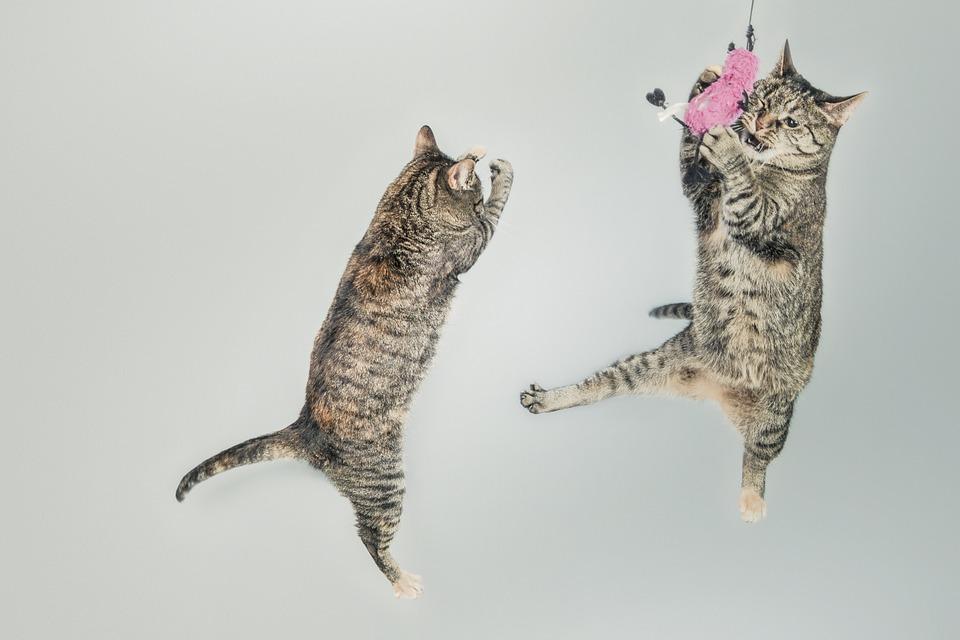 харктер кошек по гороскопу