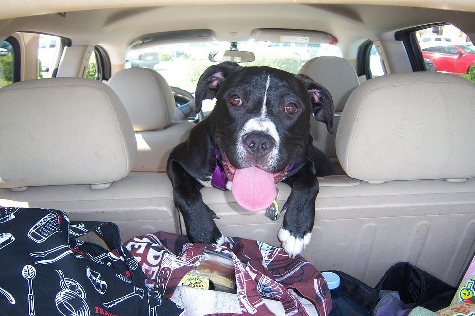 собака Стреелец обожает путешествия