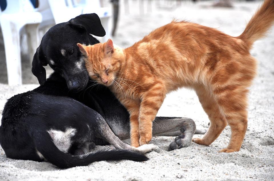 гороскоп кошек и собак