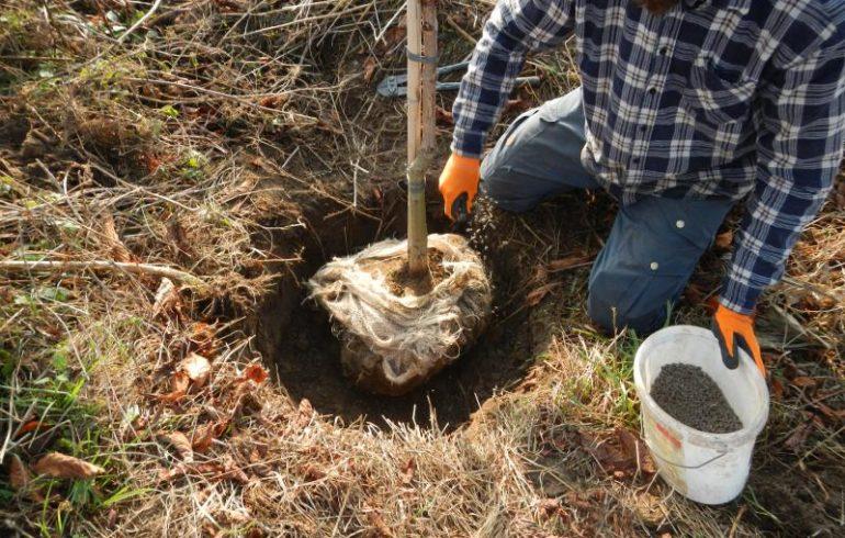 Осенняя посадка деревьев: советы эксперта