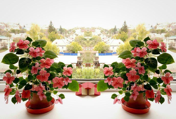 Какие цветы поселить в доме, чтобы они зацвели зимой