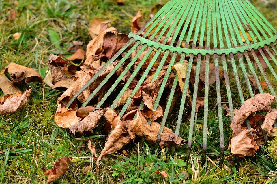 листья и грабли в осеннем саду