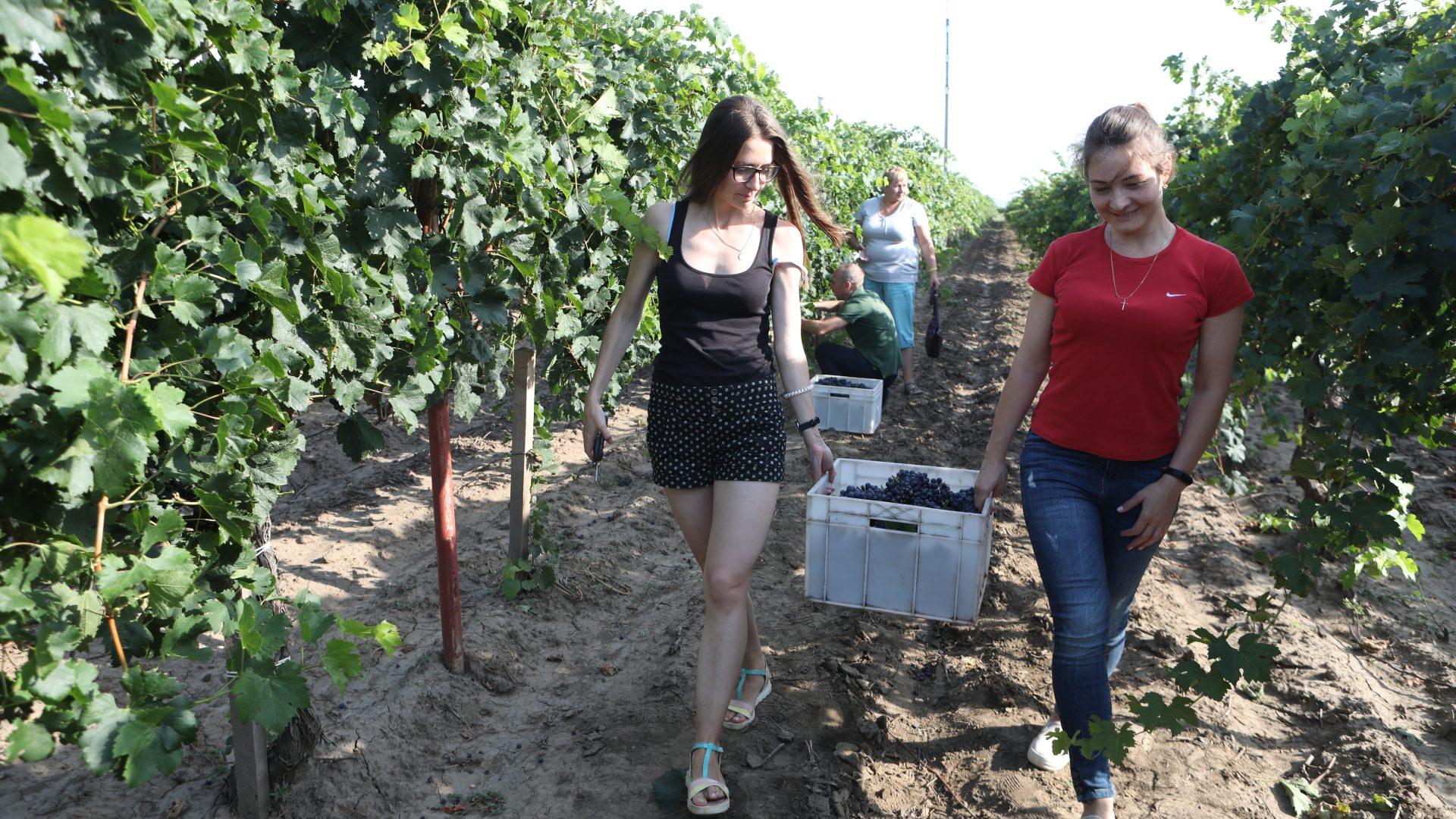 Про вино, улиток и Челентано
